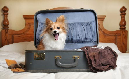 hoteles que admiten perros en Málaga