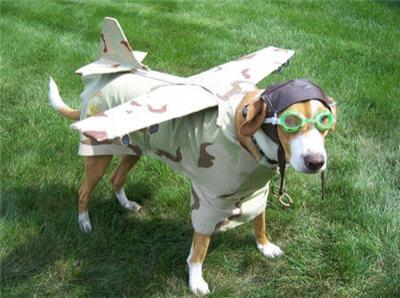 Los perros no pueden volar