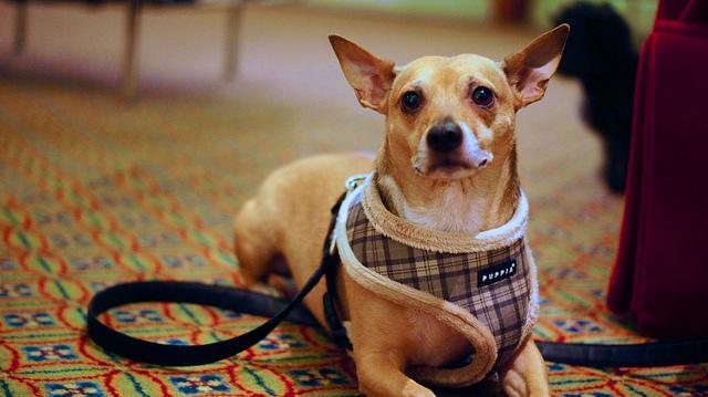 5 consejos para viajar con tu mascota