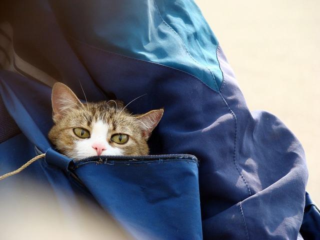 ¿Llevas bolsa de viaje para tu mascota?