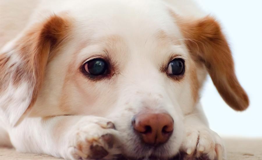 curiosidades-sobre-los-perros