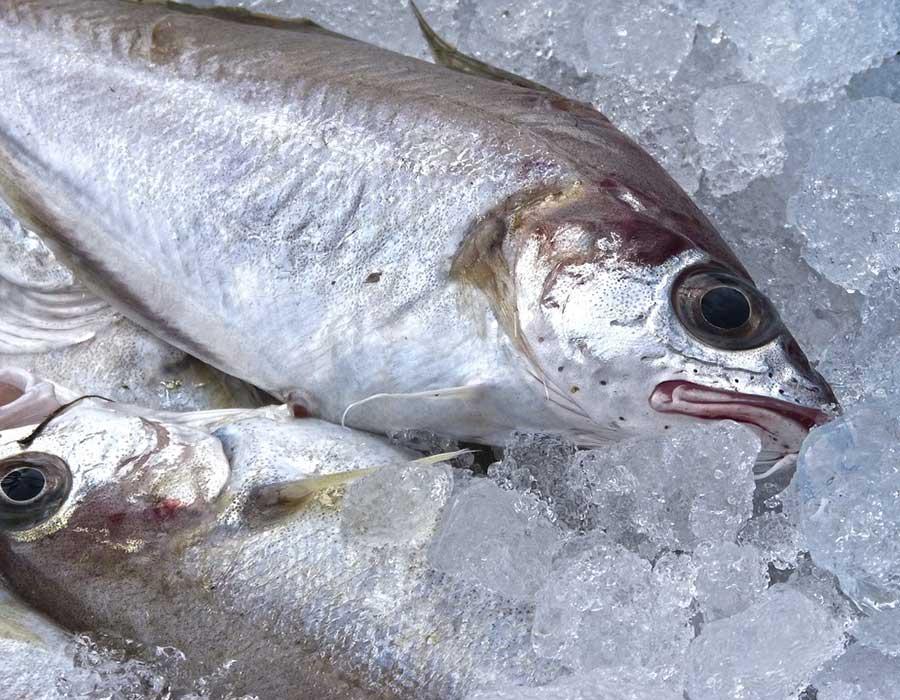 espinas-pescado