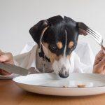 la-mejor-comida-para-perros