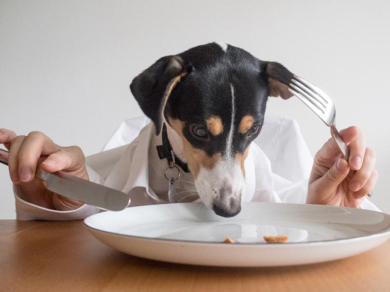 La mejor comida para perros: ¿pienso o algo más?