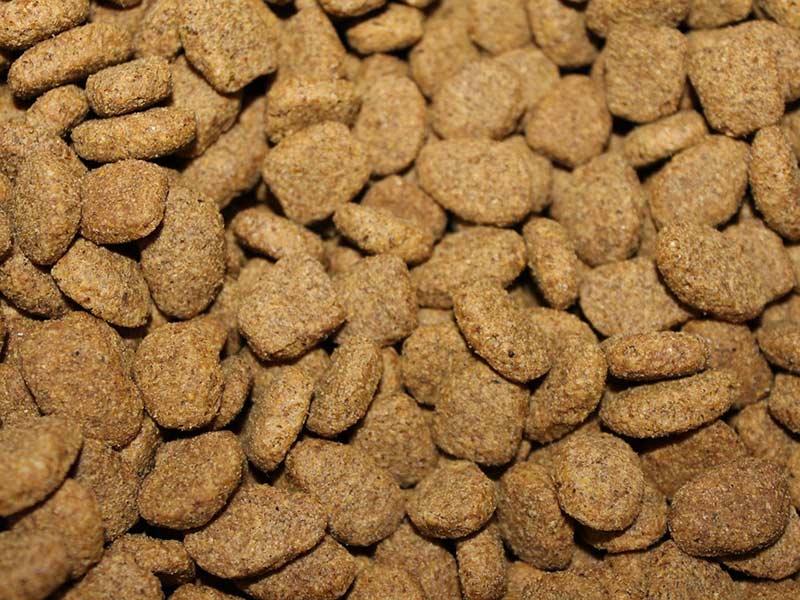 La mejor comida para perros pienso o algo m s blog hqap for Mejor pienso para perros
