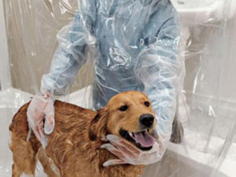 cortina-para-perros