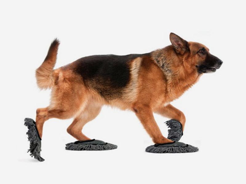 10 accesorios curiosos para perros