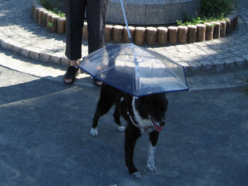accesorios curiosos para perros
