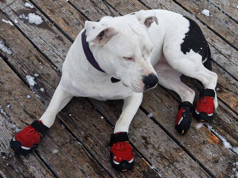 zapatos-para-perros