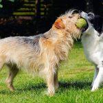 perros-edad