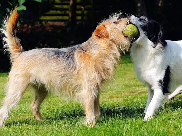 ¿Hasta qué edad viven los perros?