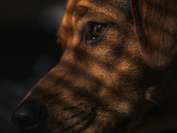 los-perros-ven-en-la-oscuridad