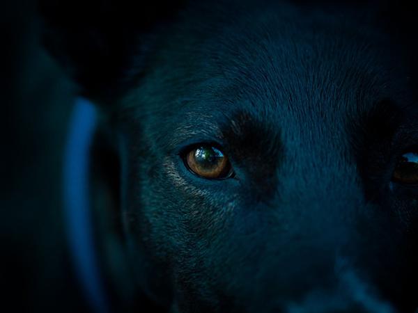 ojos-perro-noche