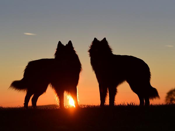 ¿Los perros ven en la oscuridad?