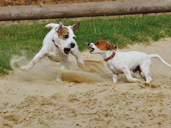 perro come tierra
