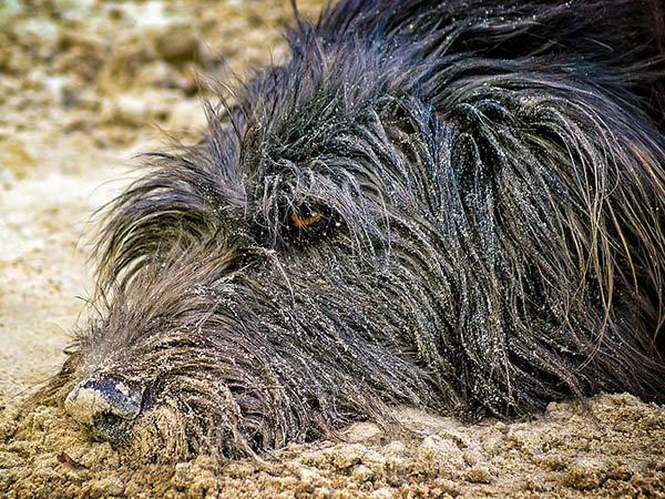 ¿Por qué los perros comen tierra?